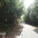 Kas Pathar Sceneries of Roads3